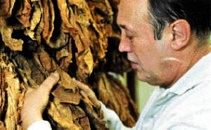 The picture of Chris inspecting his tobacco leaves as published in The Times